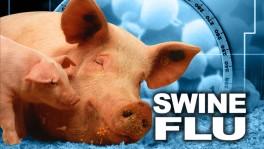 Swine flu mania